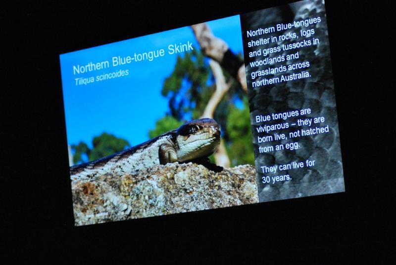 scinco dalla lingua blu del Nord - schermata informativa