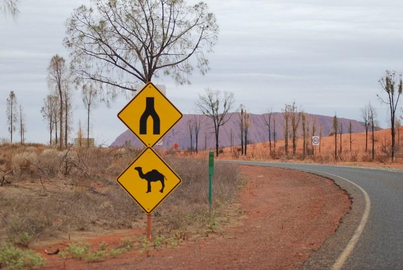 Monte Uluru con segnale stradale di attraversamento cammelli