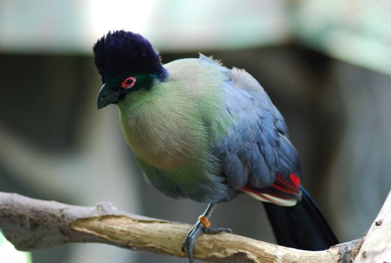 uccello tropicale al Green Planet