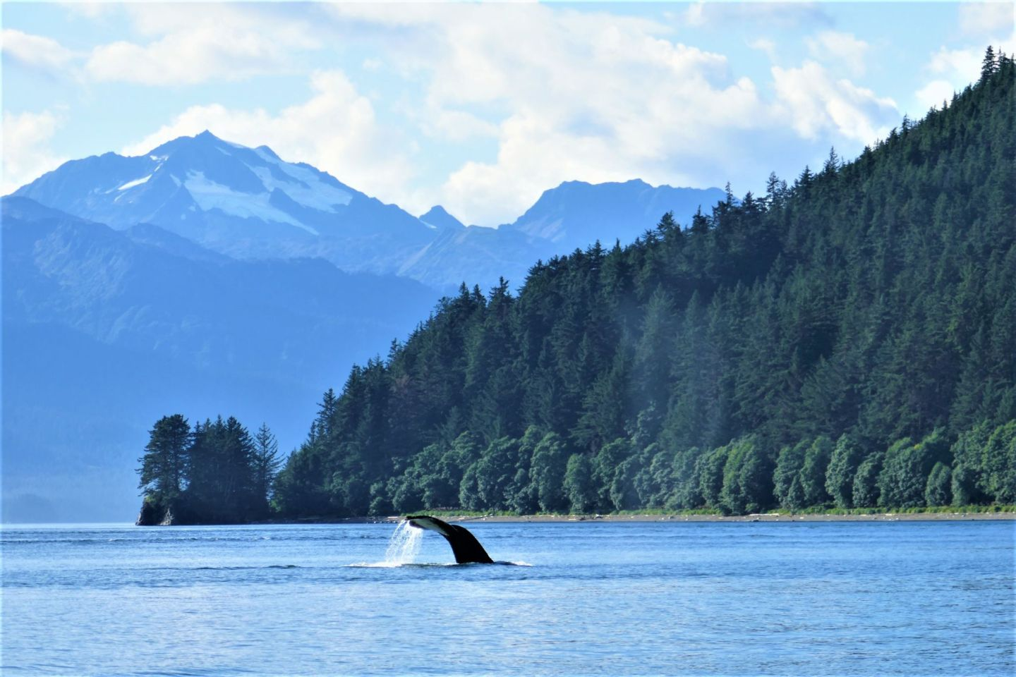 Whale Tail - Must Do Tours in Juneau Alaska - Mendenhall Glacier & Whale Watching - Lucy Williams Global