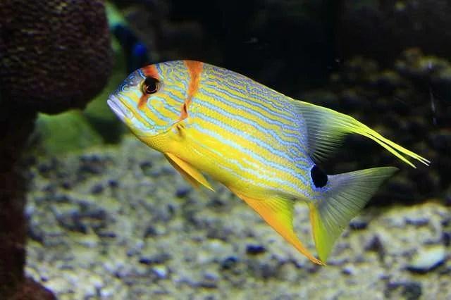 Enjoying An Underwater Safari In The Great Barrier Reef