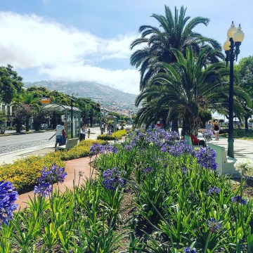 What To Do in the Cruise Port of Madeira Portugal