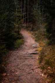 En slingrande stig i skogen vid Alljungen - Ludwig Sörmlind