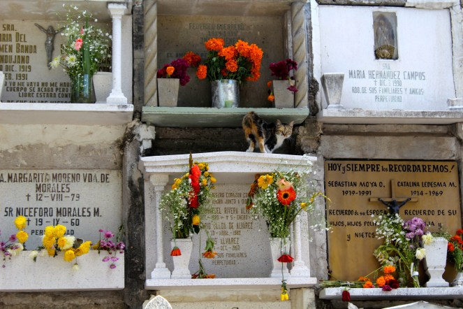 Some families go to the panteones (cemeteries of tombs) on the night of November 1st, leaving flowers and offerings at the graves of loved ones.