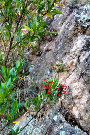 Flowers on the path to La Bufa
