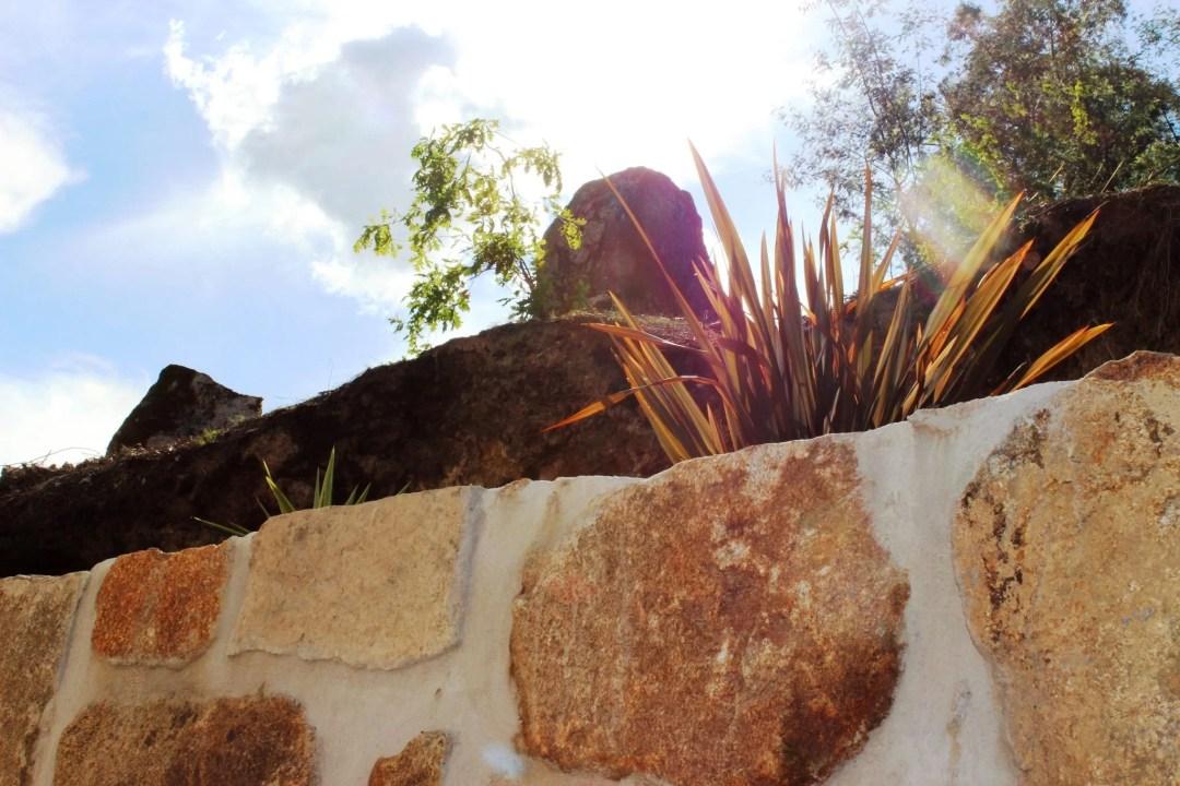 foto planten boven muur