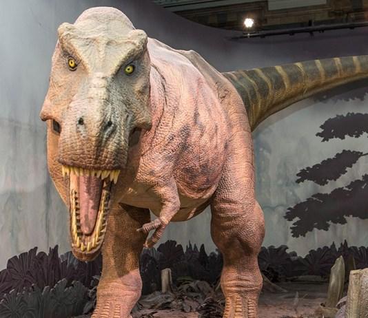 Vídeo Los Dinosaurios del Science Museum - Londres