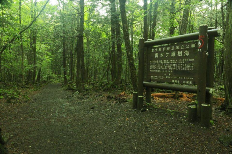 Bosque suicidios Japón