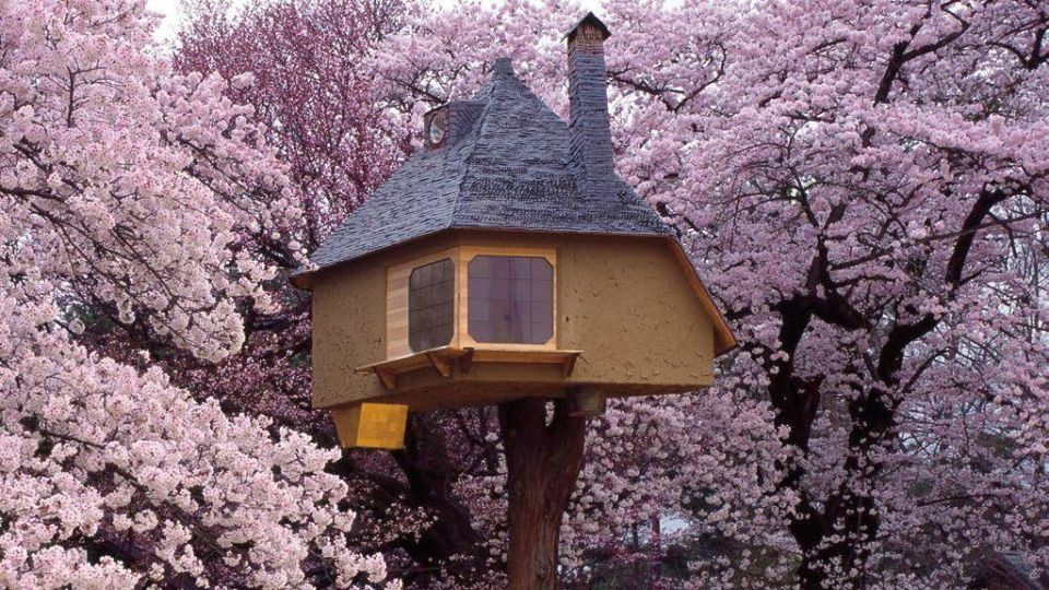 cabaña en árboles en japón