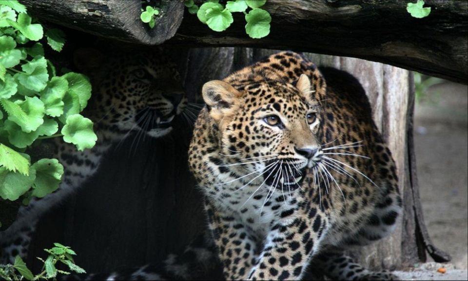 Zoológico de Castellar