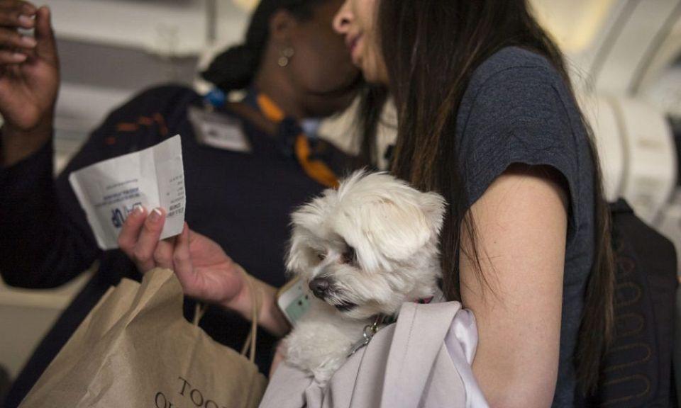 pasaporte para perro