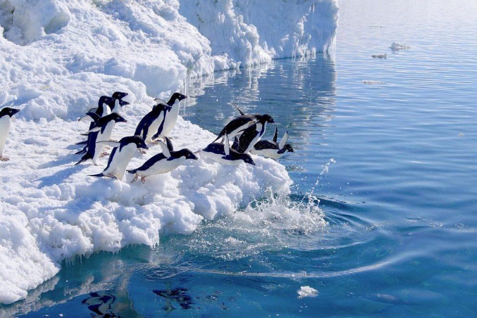 Tierras Australes y Antárticas Francesas, Francia