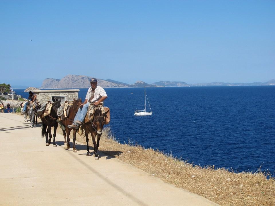 Los burros son el único medio de locomoción permitido en la isla de Hydra