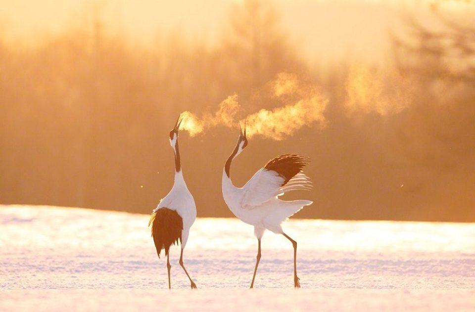 Santuarios de aves migratorias, China