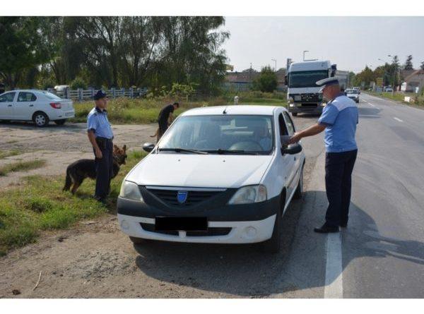 Lugoj Expres Razie în zona secțiilor rurale Găvojdia și Lugoj razie Poliția Municipiului Lugoj Lugoj Găvojdia