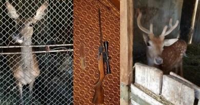 Lugoj Expres Opt percheziții la persoane bănuite de braconaj și nerespectarea regimului armelor și munițiilor vânat Topolovățu Mare Teș Siștra percheziții muniție descinderi braconieri braconaj arme animale sălbatice activități infracționale