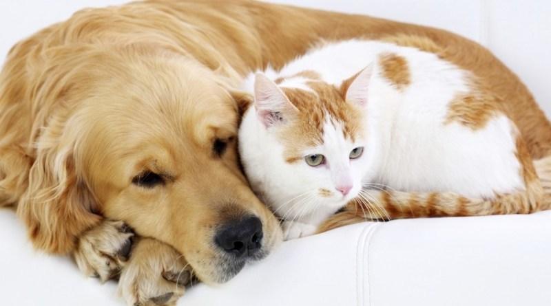 Lugoj Expres Campanie de sterilizări/castrări gratuite pentru câini și pisici, la Boldur Traian Vuia Știuca sterilizări pisici Peta Germania Lugoj gratuit Free Amely 2007 Eduxanima castrări campanie câini Boldur Asociația Free Amely 2007 Lugoj animale