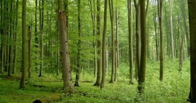 Lugoj Expres Proprietarii de păduri pot solicita sprijin financiar printr-o schemă de ajutor de stat sprijin financiar sprijin servicii de silvomediu servicii climatice proprietarii de păduri păduri conservarea pădurilor cereri APIA ajutor de stat