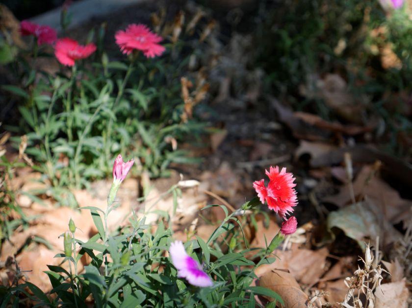 Flores al sol de la mañana. Artículo sobre el Real Jardín Botánico de Madrid. Fotografía de Luis F. Roncero.