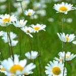 Sin Lluvia no Habría Flores