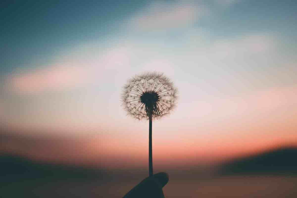 Ejercicio de gratitud diaria