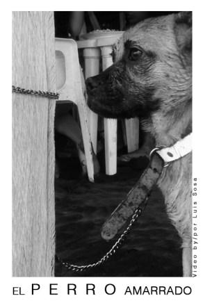 Poster El Perro Amarrado