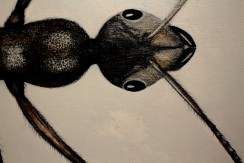 antdetail2
