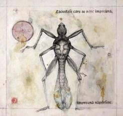 locust-1