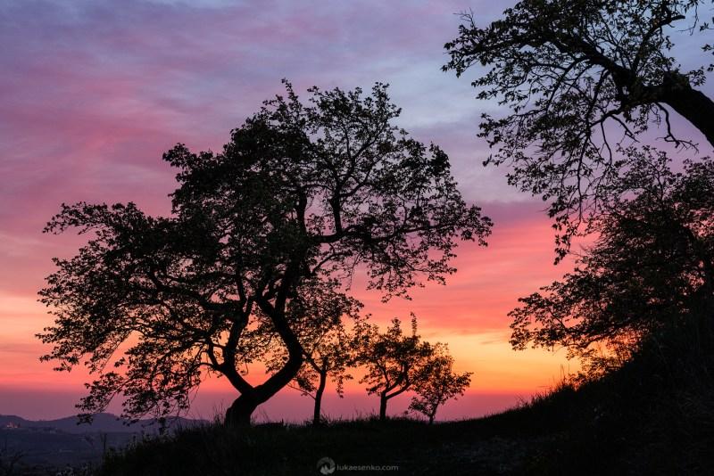 Sunset colours at Goriška Brda