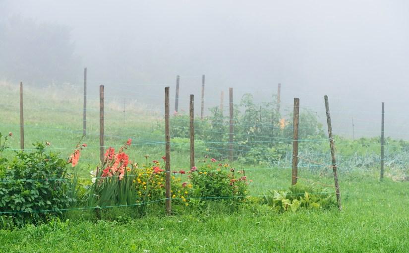 Rainy morning in village Rut