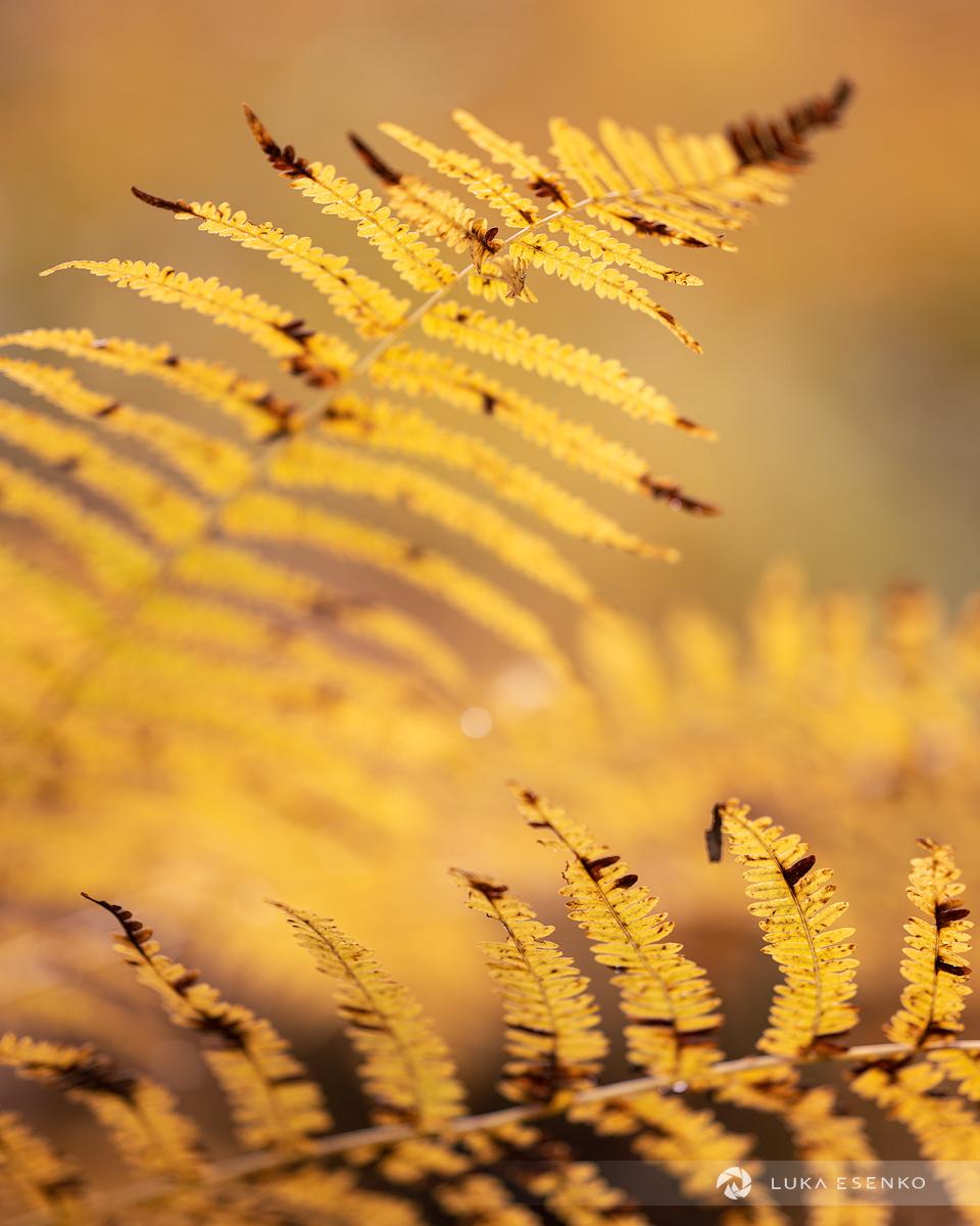 Autumn in Slovenia - detail of a fern