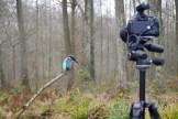 Funkfernauslösung beim Eisvogel (Foto: Sven Decker)