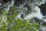Wildwasser an der Wutach