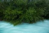 Weidengebüsch