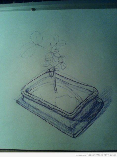 szkic w połowie - Szarańczyn strąkowy