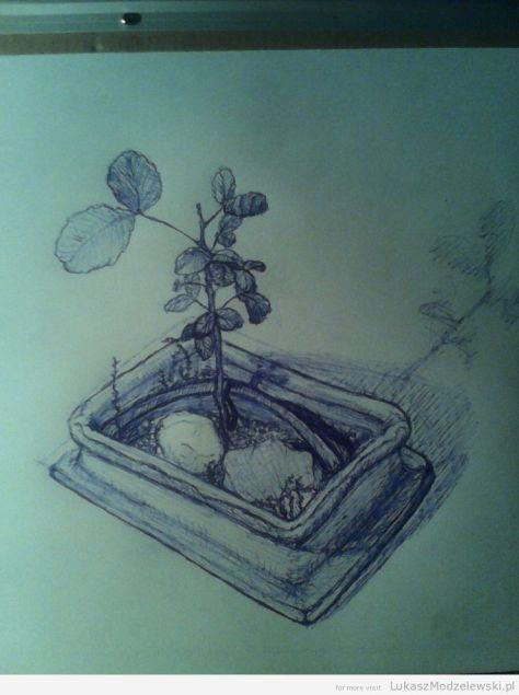gotowy szkic - Szarańczyn strąkowy