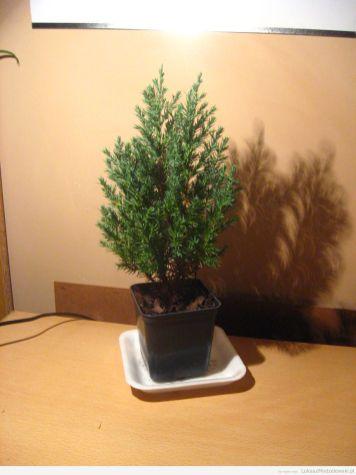 Drzewko za makulaturę 2