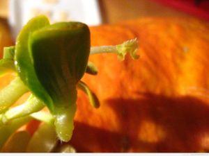 Zbliżenie na pojedynczą roślinkę