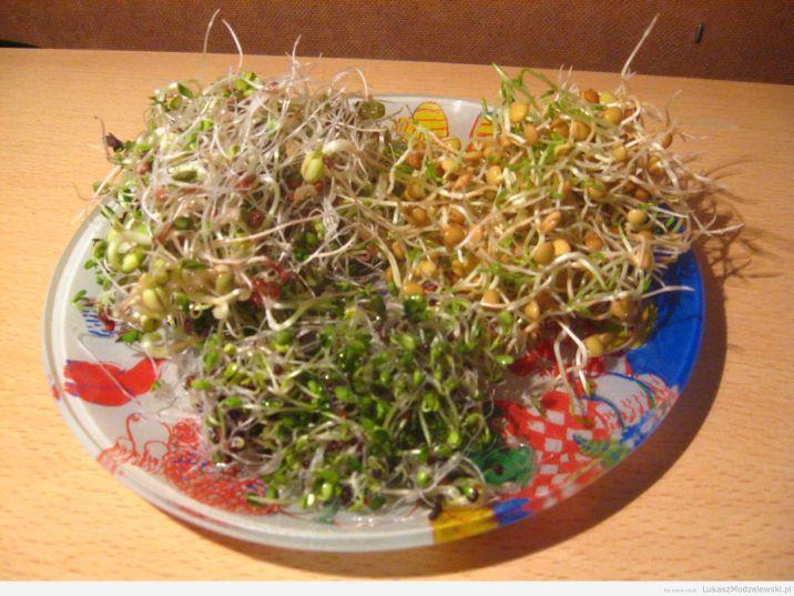 Kiełki: brokuł, soczewica i mieszanka