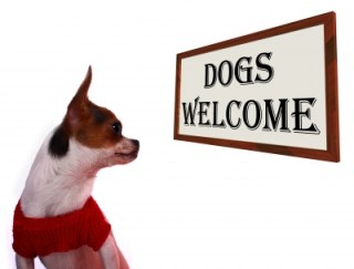 Dog staring at a sign that says Dogs Welcome
