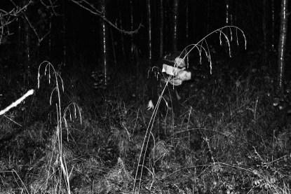 woods12