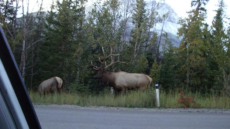 10 Banff 014
