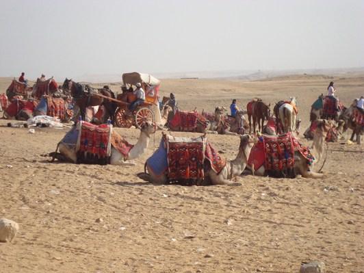 10 Egypt 03 114