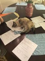 too much homework