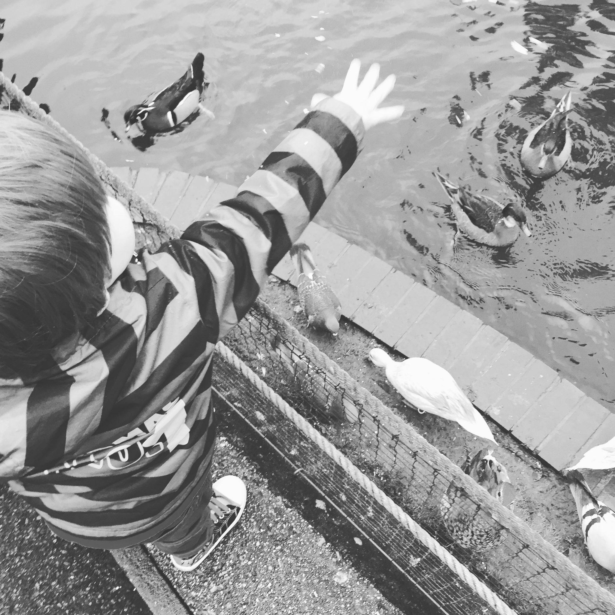 Feeding The Ducks At Birdworld, Farnham, Surrey at https://lukeosaurusandme.co.uk @gloryiscalling