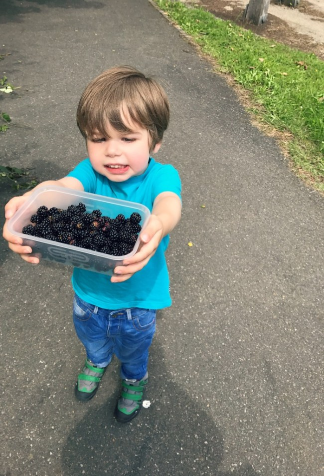 Picking blackberries and making apple and blackberry crumble. Perfect summer holiday activity from https://lukeosaurusandme.co.uk