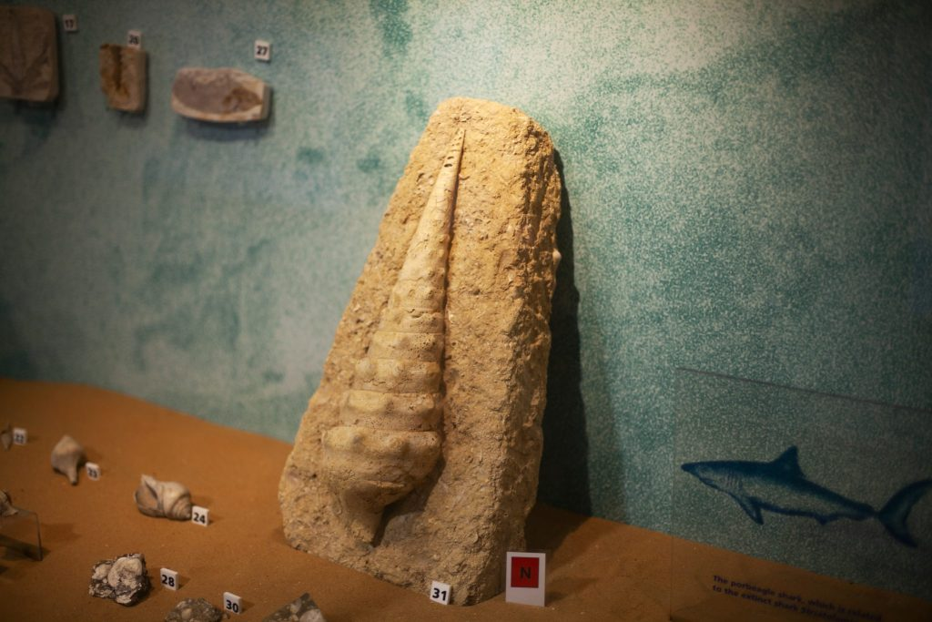There's a huge collection of fossils in the Dinosaur Isle museum in Sandiwn, Isle Of Wight. We visited as part of Red Funnel Ferry's new self guided day trip packages - read our full review at https://lukeosaurusandme.co.uk