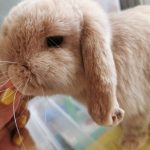 a house bunny update - harry the dwarf lop https://lukeosaurusandme.co.uk