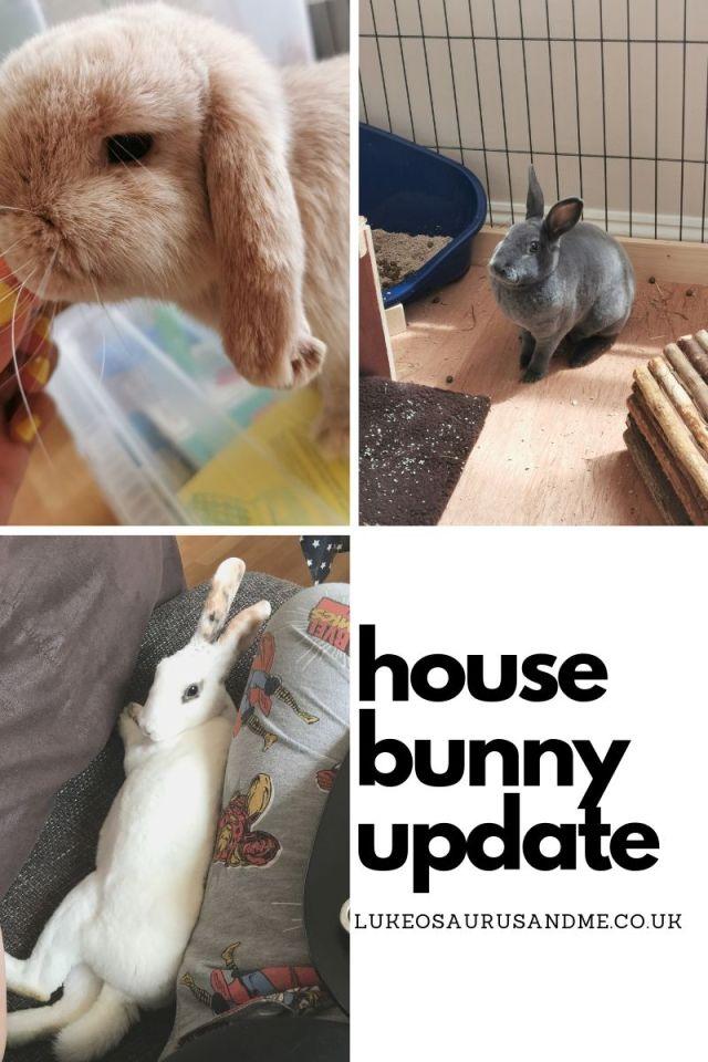 Dwarf lop, mini rex and standard rex house bunnies at https://lukeosaurusandme.co.uk