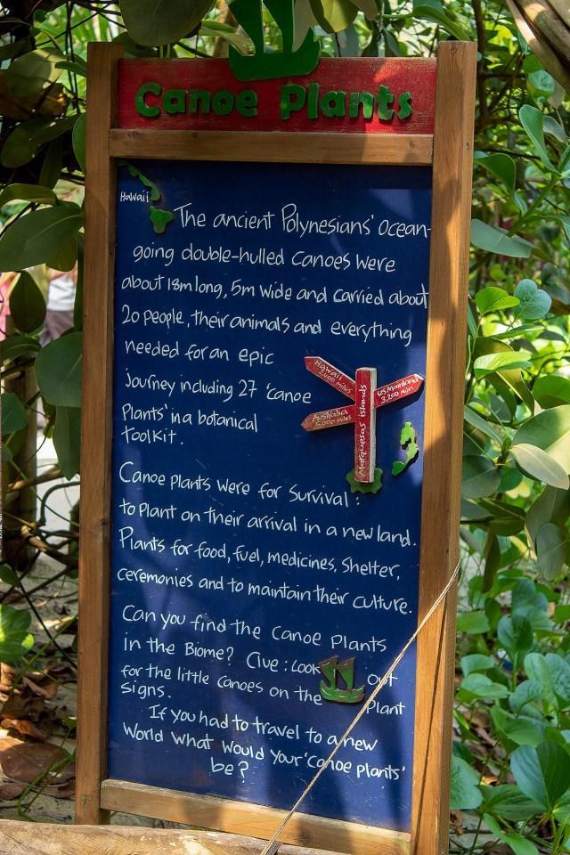 A sign at The Eden Project explaining what Canoe Plants are.